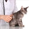 Ветеринарные клиники в Долгоруково